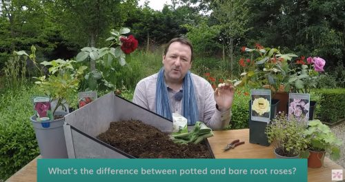 Watch Mark's Complete Guide to Roses with Primrose TV